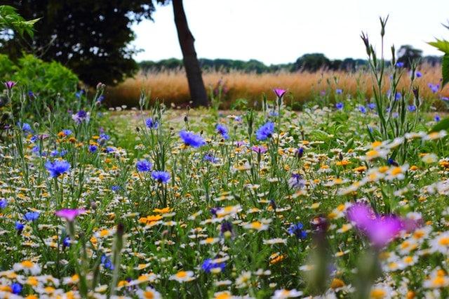 Pollen und Gräser Allergie