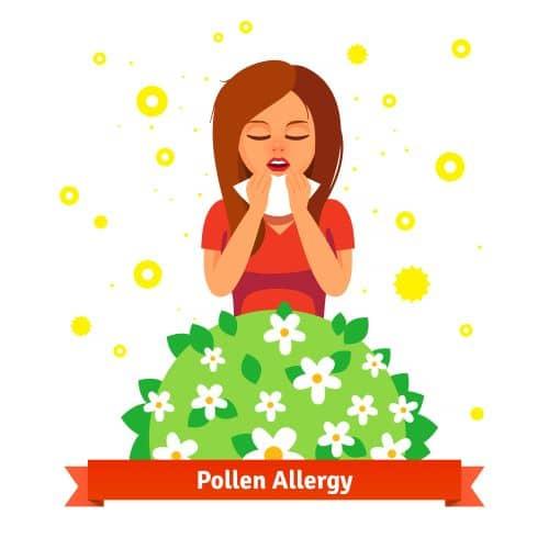 Pollen und Gräser Allergien