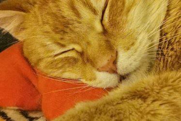 12.08.2021: Was tun bei Tierhaarallergie? JETZT etwas dagegen tun!